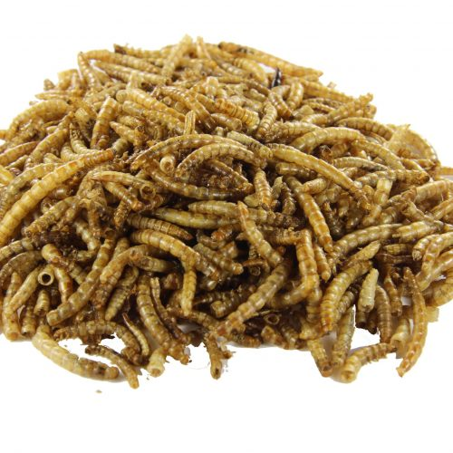 Mealworms for animal feed