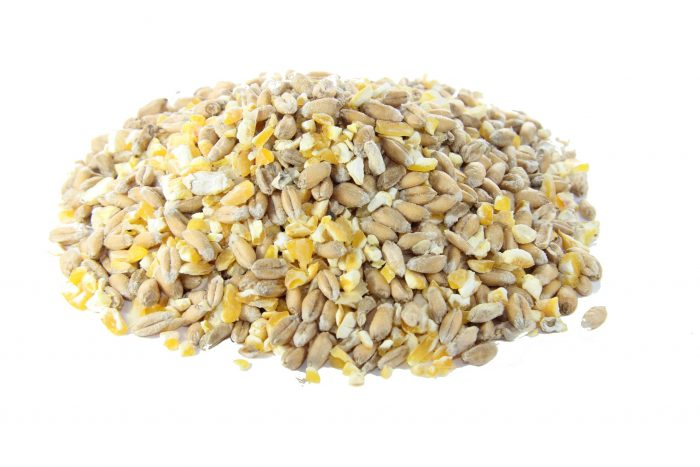 Mixed Corn for chickens and poultry